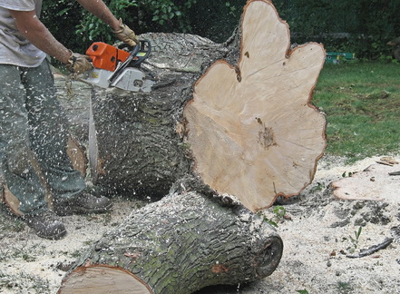 man chainsawing tree for tree removal