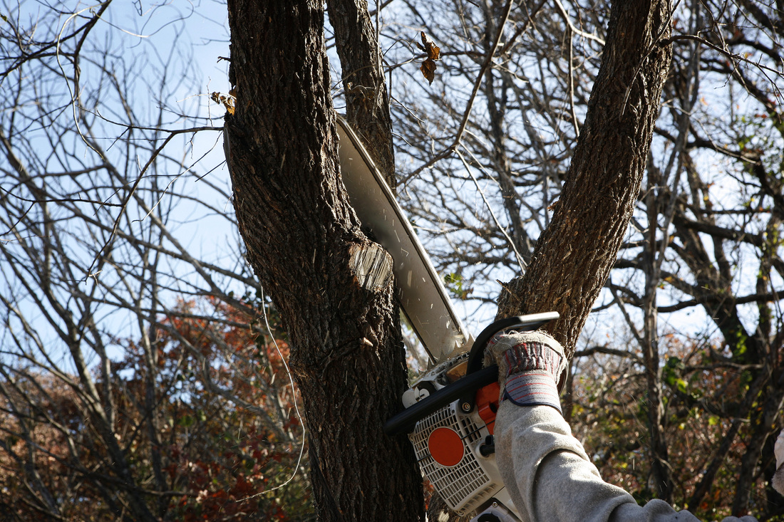 tree trimming professional tree care services in pasadena md