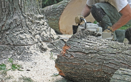 tree removal on property by tree care professionals