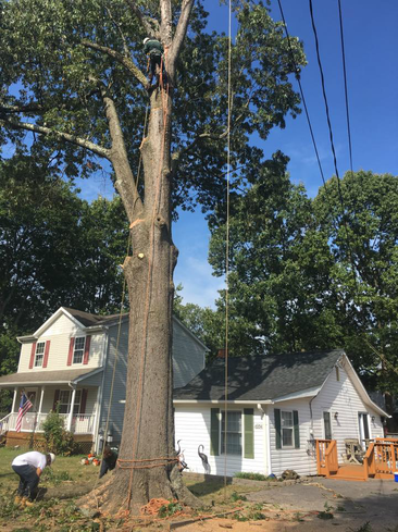 residential tree trimming services right in arnold, maryland