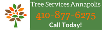tree services in annapolis md call us today at 410-593-1680