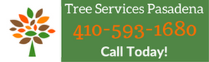call us today for tree care services by tree services pasadena, md at 4105931680